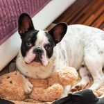 Gaitherhouse - Pet Friendly